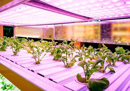 Indoor LED Grow Lights Oshawa